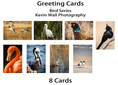 Bird Series Greeting Card Set