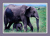 75H0904179538CardElephantBaby