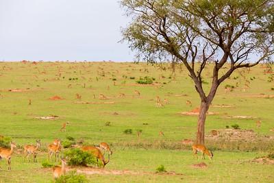 Uganda_Five_Stars (16 of 63)