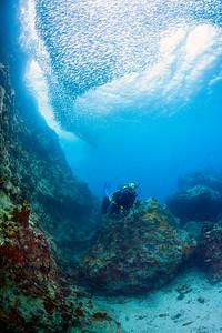 WavesofFish*7593
