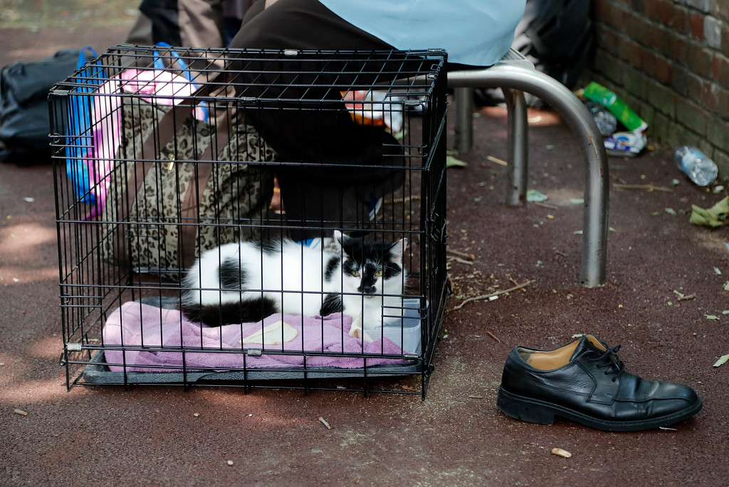 . A cat sits in a cage near to the high-rise apartment building where a massive fire raged, in London, Wednesday, June 14, 2017. A deadly overnight fire raced through a 24-story apartment tower in London on Wednesday, killing at least six people and injuring more than 70 others. (AP Photo/Frank Augstein)