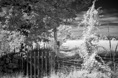 The Gate to Summer