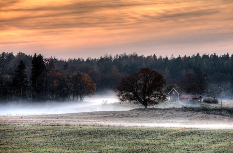 Misty Autumn Afternoon
