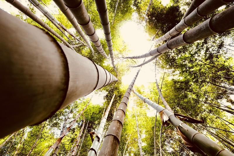 Bambooo