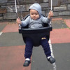 Grey swinging in the spring!