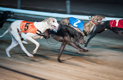 Racy Thunder (T4) and Droopys Alfie (T5)