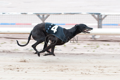 Droopys Roo