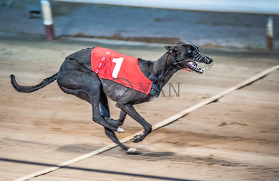 Droopys London