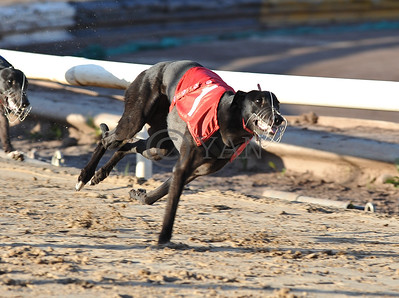 Droopys Hope