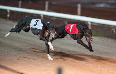 Builders Bolt (t3) and Droopys Perugi (t1)