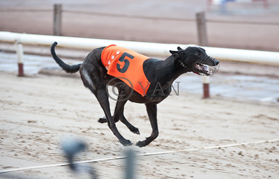 Droopys Diiop