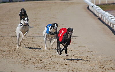 Coventry Dogs