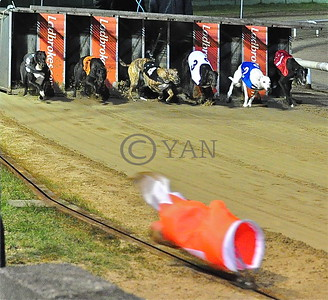 Monmore Dogs