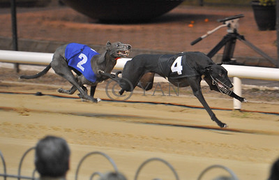 Droopys Jet leads Lemon Velvet