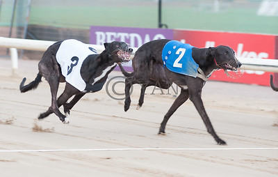 Shaneboy Spencer (T3) and Phoenix Bolt (T2)