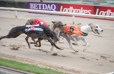 Mustang Blitz, Swift Keith and Droopys Genie