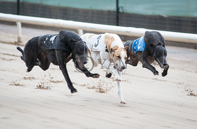 Fermoy Henry (t4), Mags Gamble (t3) and Droopys Pride (t2)