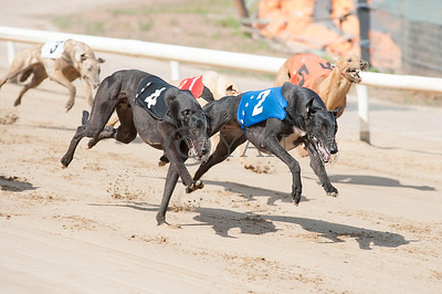 A Few Dollars More (t4) and Westmead Bertie (t2)