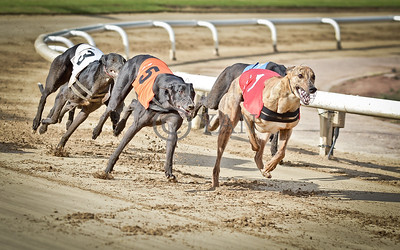 Jacobs Courage (t1) and Droopys Diop (t5)