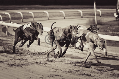 Jacobs Courage and Droopys Diop