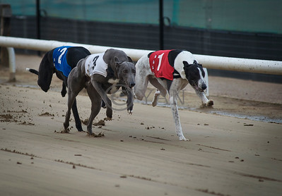 Graigues Orchard (T1) and Droopys Betson (T3)