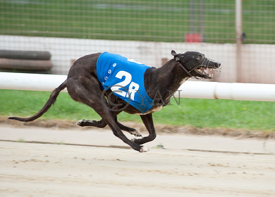 Droopys Angie