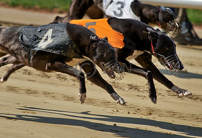 Droopys Stosur and OOar Wokaboutme