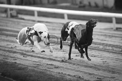 droopys_concepta_galtee_paddy