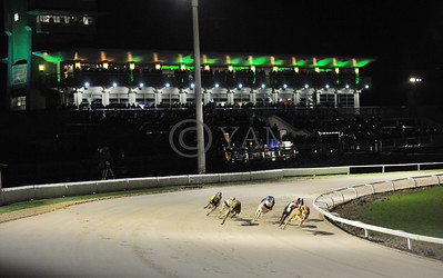 First race unfortunately voided due to hare breakdown - at the time, Downton Flyer was leading round the first bend… Towcester 13th December 2014. Photo: Steve Nash