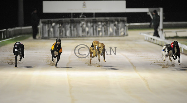 Head on view at Towcester: plenty of room for the pups, as winner Lenson Jed (t2) disputes the early lead with Swift Whirlwind (t3). Towcester 6th December 2014. Photo: Steve Nash