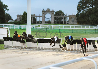 Towcester's grand entrance gates provide a fitting backdrop to another piece in the racecourse's history - the greyhound track's first ever hurdle race won in style by Razldazlnewstalk (t1) from Reculver Ozzie (t3). 18th August 2015. Photo: Steve Nash