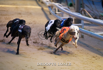 droopys loner