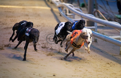 Droopys Loner leads Taylors Sky and Blonde Snapper