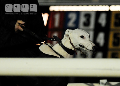 Peterborough Greyhound Stadium 31/10/2012