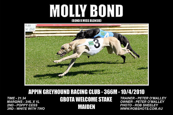 Appin_Greyhounds_100410_Race_01_Molly_Bond