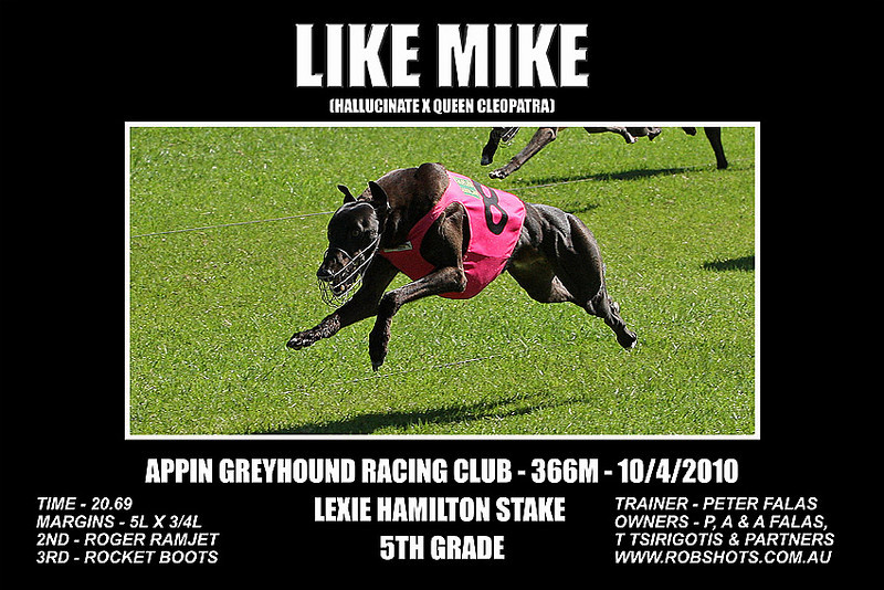 Appin_Greyhounds_100410_Race_04_Like_Mike