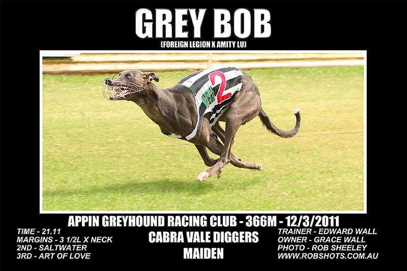 Appin_120311_Race05_Grey_Bob