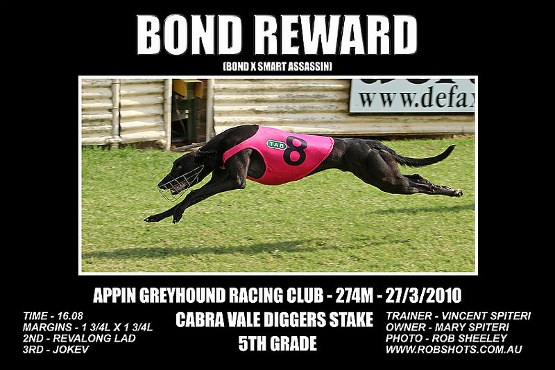 Appin_Greyhounds_270310_Race_10_Bond_Reward