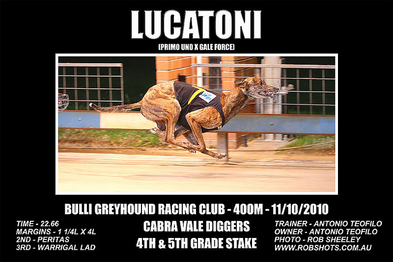 Bulli_111010_Race08_Lucatoni
