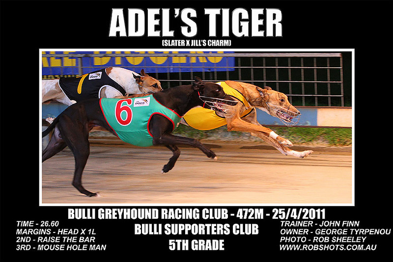 Bulli_250411_Race05_Adels_Tiger