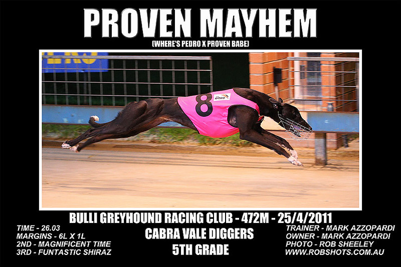 Bulli_250411_Race08_Proven_Mayhem