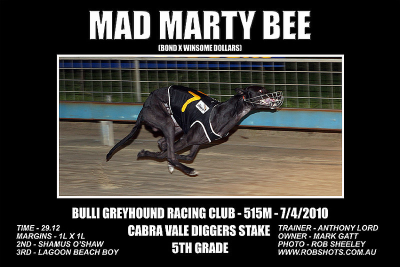 Bulli_Greyhounds_070410_Race_07_Mad_Marty_Bee