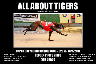 Dapto_130111_Race02_All_About_Tigers