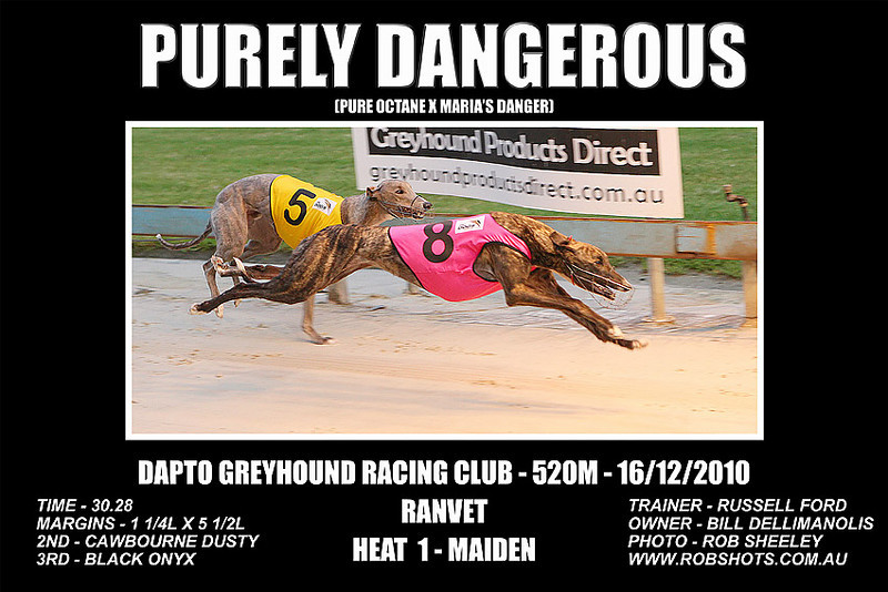 Dapto_161210_Race01_Purely_Dangerous
