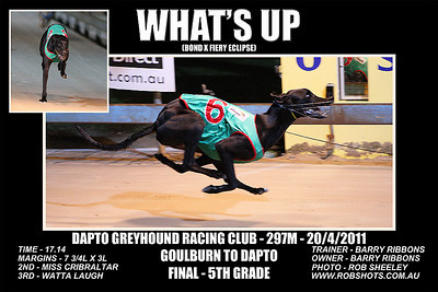 Dapto_200411_Race04_Whats_Up