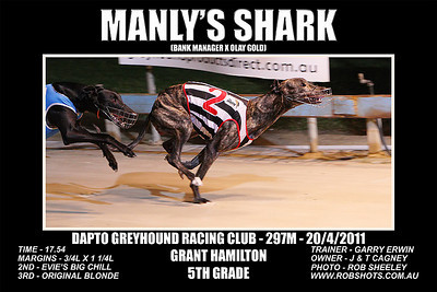 Dapto_200411_Race03_Manlys_Shark