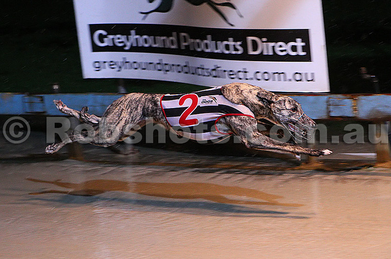 Dapto_200711_Race04_Beauella