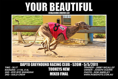 Dapto_050511_Race02_Your_Beautiful
