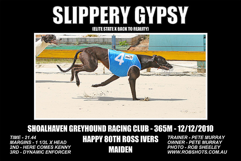 Nowra_121210_Race01_Slippery_Gypsy