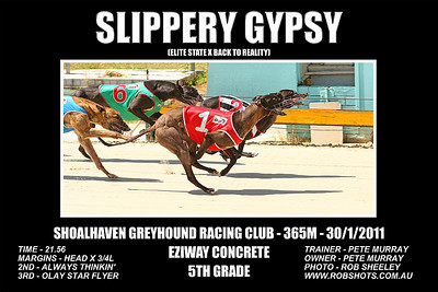Nowra_300111_Race02_Slippery Gypsy